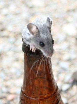 Басня о мышке, кошке и пиве