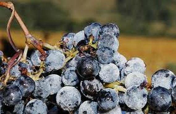 Айсвайн – вино Снежной королевы